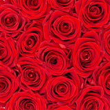Red Eternity Roses In Black Box