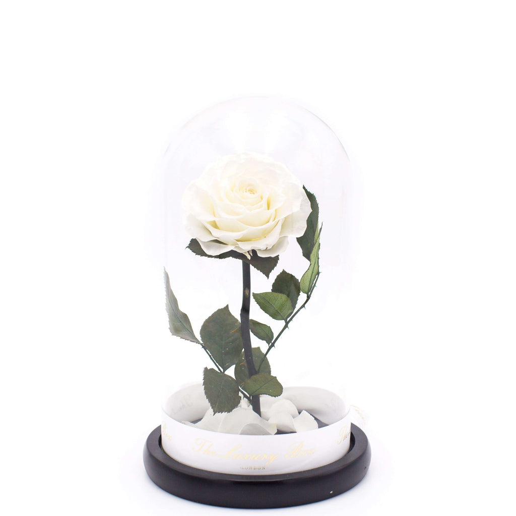 White Rose In Glass Dome XL - Luxury Box London