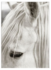 "Art - Horse, Focusing on White 42""H"