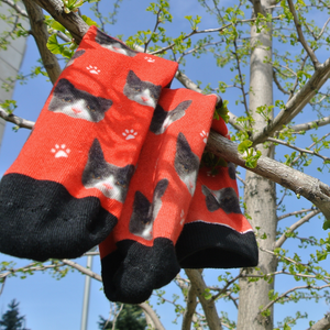 Custom Cats & Paws Face Socks 🐱 - Sock That!