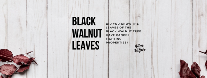 Black Walnut Leaves May Have Cancer Fighting Properties