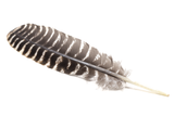 Banded Smudge Feather