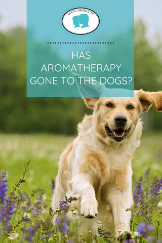 Has aromatherapy gone to the dogs?