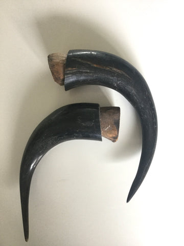 Pair of Stag horns with wooden cork