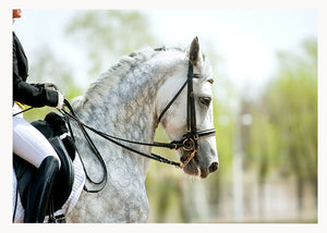 Dressage horse in harness from Cloud Publishing