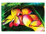 Frangipani hot pink and yellow illustration greeting card published by Cloud Publishing