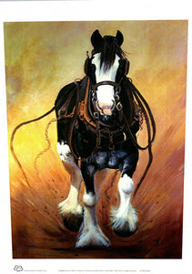 Running Clydesdale horse in harness called Nugget by Peter HIll and published by Cloud Publishing