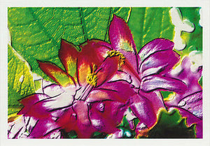 Flower greeting card of purple zygocactus flowers