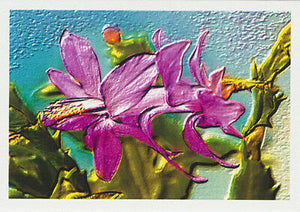 Christmas Cactus Lavender girl greeting card from Cloud Publishing