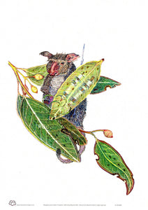 Possum in Gum Leaves Wall Art A4 unframed print by artist John Howarth