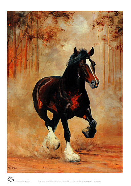 Clydesdale galloping horse unframed A4 decor print titled the Breakaway by Peter Hill and published by Cloud Publishing