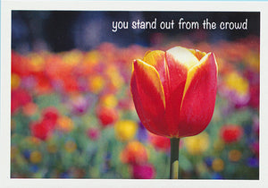 "Red and yellow tulip in a field with the caption ""You stand out from the crowd"" greeting card  published by Cloud Publishing"