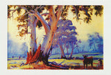 Greeting card of Australian Gum trees Ulmarra to Tucabia NSW by artist PJ Hill published by Cloud Publishing
