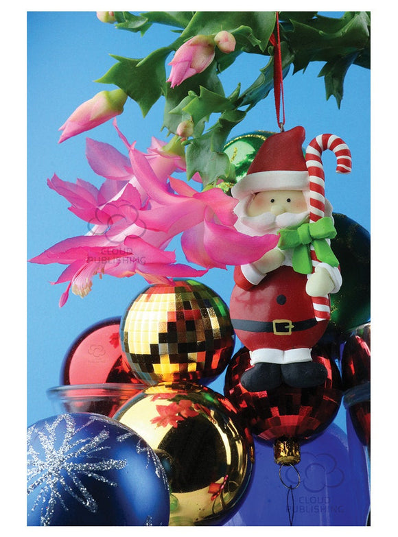 Christmas cactus Christmas card with Santa Claus from Cloud Publishing