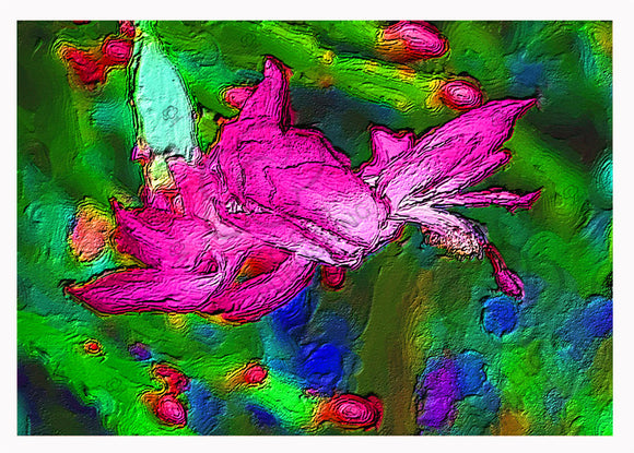 Flower greeting card zygocactus variety Millie mauve coloured published by Cloud Publishing