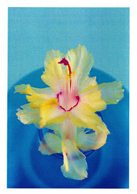 Christmas cactus greeting card yellow frilly Chelsea zygocactus variety published by Cloud Publishing