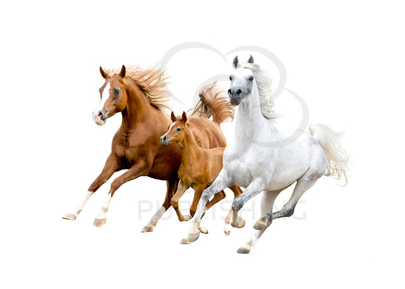 Wild running horses greeting card published by Cloud Publishing