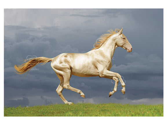 Golden Perlino horse greeting card
