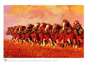 Twelve Clydesdale horses in a row A4 unframed print by Peter Hill published by Cloud Publishing