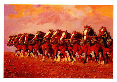 Horse power greeting card from Cloud Publishing