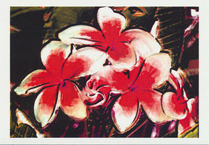 illustration of red and white frangipani by artist Tony Brindley published by Cloud Publishing
