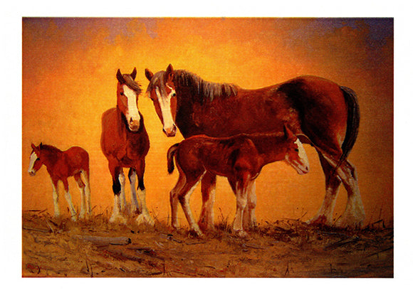 Young horse foals in paddock greeting card by Peter Hill