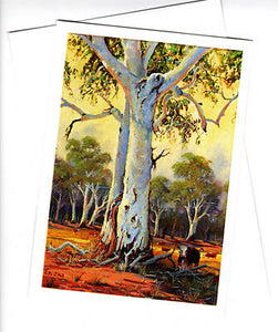 Australian Ghost gums by Peter Hill and Cloud Publishing