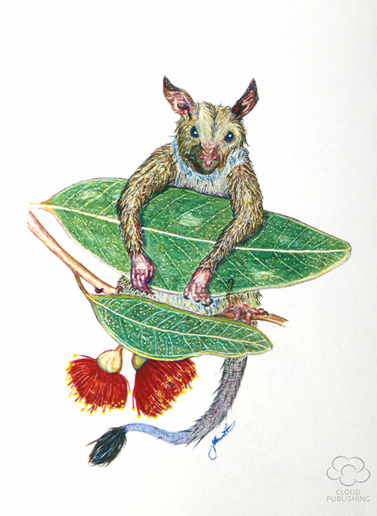 Possum hanging in red flowering gum leaves greeting card by artist Jon Howarth and published by Cloud Publishing