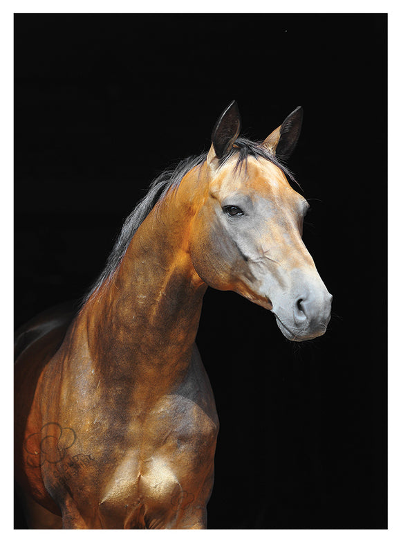 Akhal Teke light gold bay horse greeting card published by Cloud Publishing