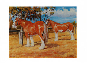 Clydesdales resting by Australian artist peter Hill and printed as a greeting card by Cloud Publishing