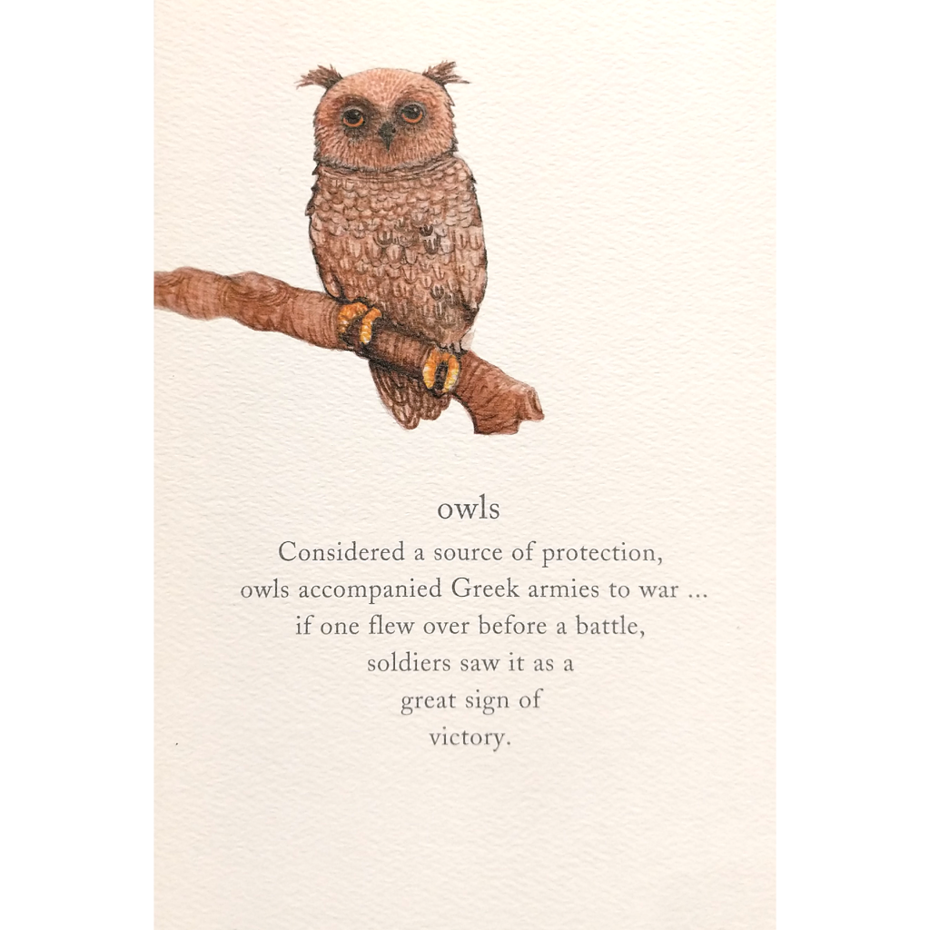 Support Card: Owls
