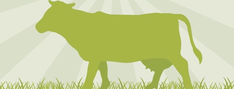 Grass Fed Beef Guide Australia