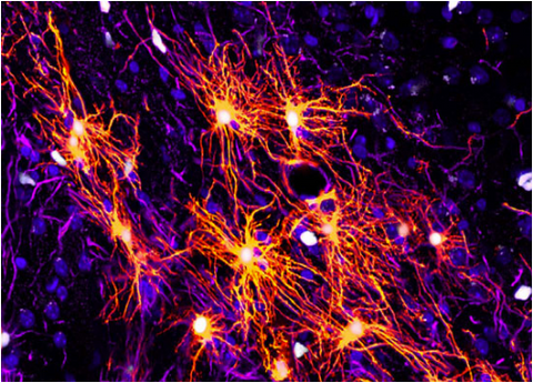 Brain Cells: Neurotransmitters' Interactions, Receptors and Vital Background Processes