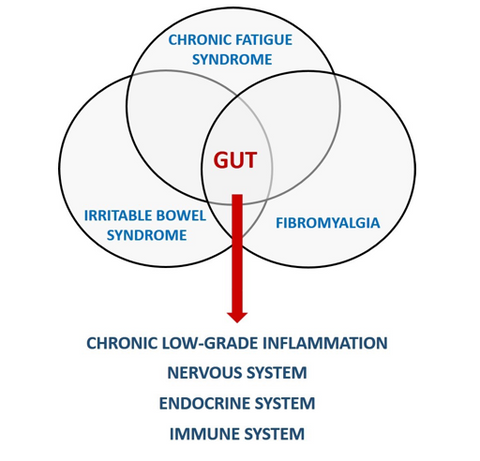 Gut Microbiota and CFS Chronic Fatigue Syndrome