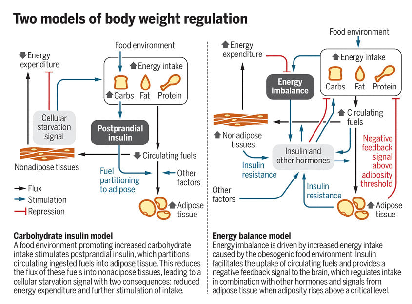 two models of body weight regulation