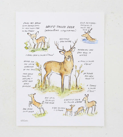 woodland guide white-tailed deer giclee