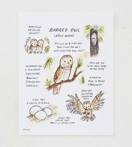 woodland guide barred owl giclee