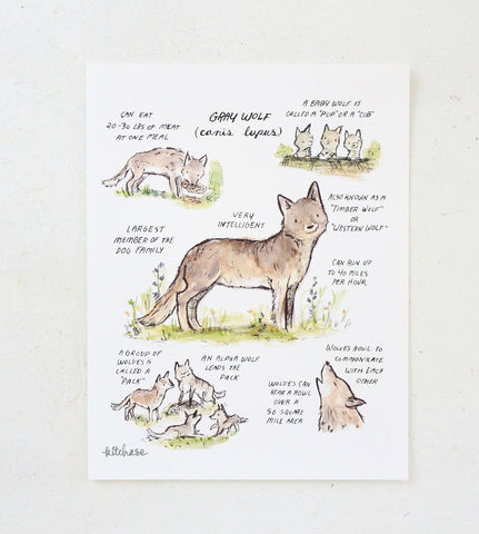 woodland guide gray wolf giclee