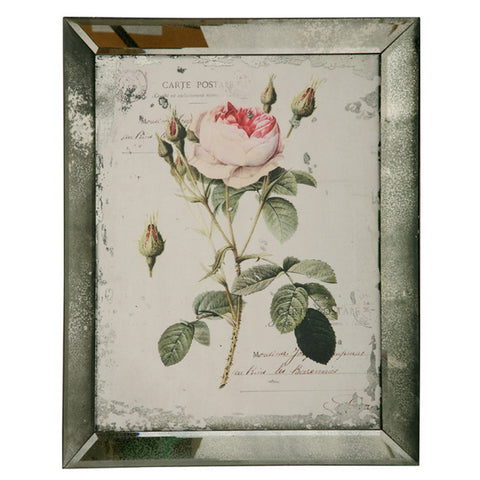ENGLISH ROSE BUDS AND BLOOMS