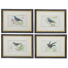 "ANTIQUE BIRD PRINTS 18X14"" SET OF 4 ASSORTED STYLES"