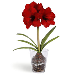 RED AMARYLLIS BULB 24""