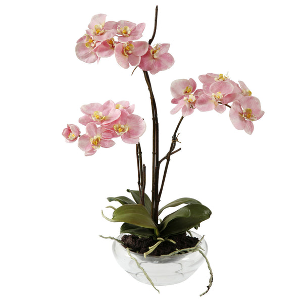 PHALAENOPSIS IN GLASS BOWL