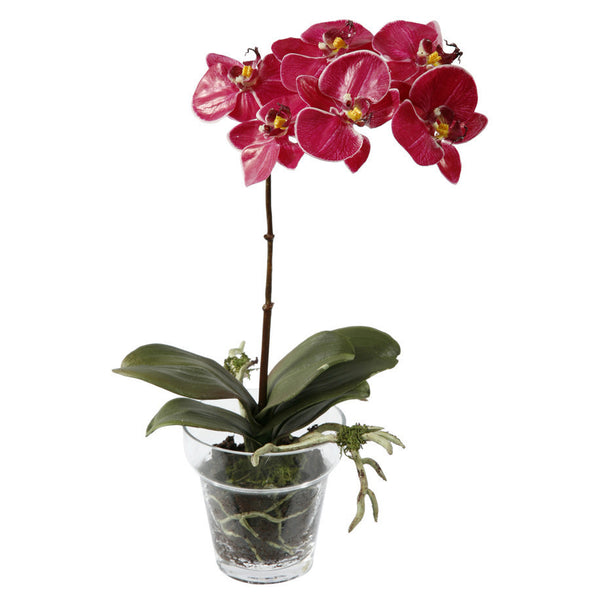 PHALAENOPSIS PLANT IN GLASS POT 14""