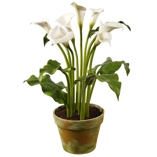 CALLA IN CLAY POT LARGE 30IN