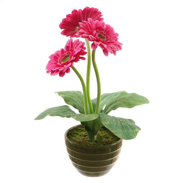 POTTED GERBERA 13''H