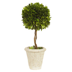 "Preserved Boxwood Topiary 16"" Tall Green"