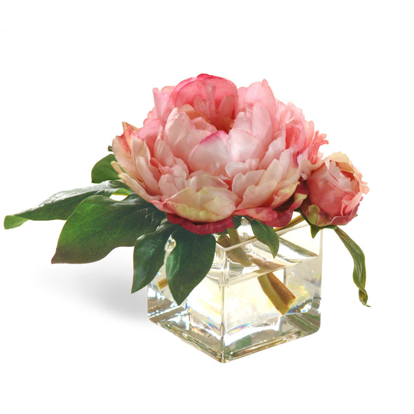 COLLECTIBLE MINIATURE PEONIES