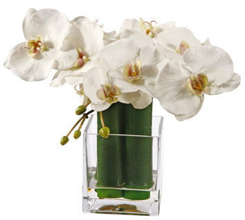 PHALAENOPSIS IN GREEN BAMBOO