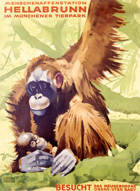 Munich Hellabrunn Zoo Ape Fine Art Print