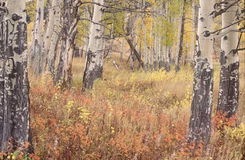 Autumn Woods by Ken Archer Fine Art Print